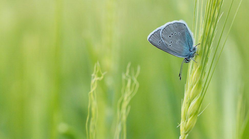 Schlafenszeit - Schlafende Schmetterlinge - Hondarium