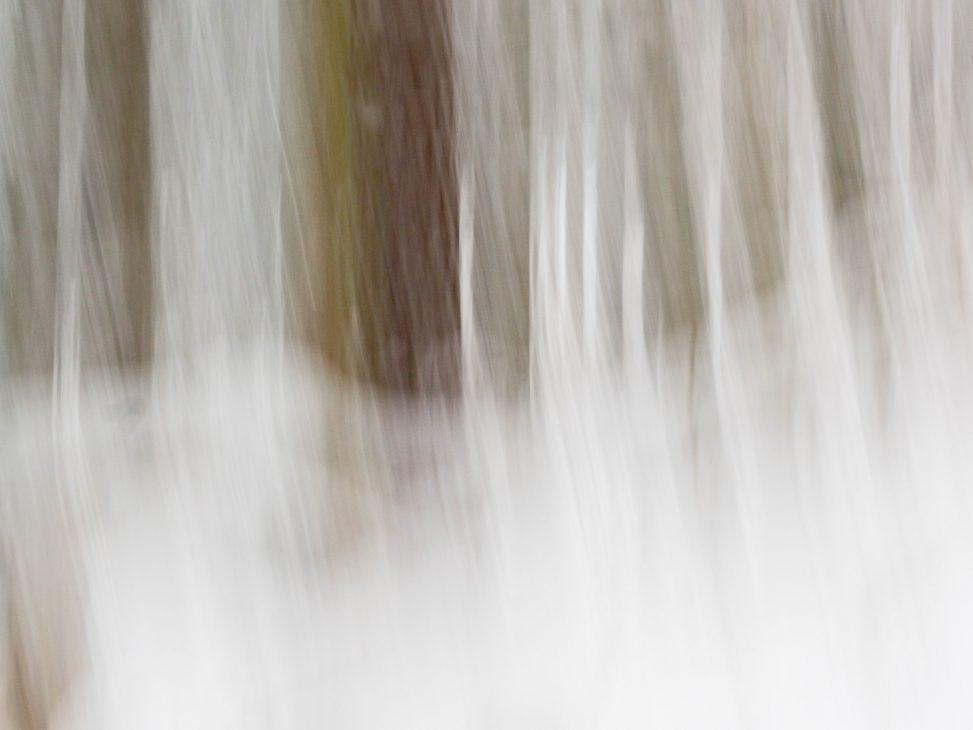Winterwald - Leben - Hondarium